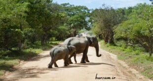 آیا به کاربردهای خرطوم فیل فکر کردهاید؟