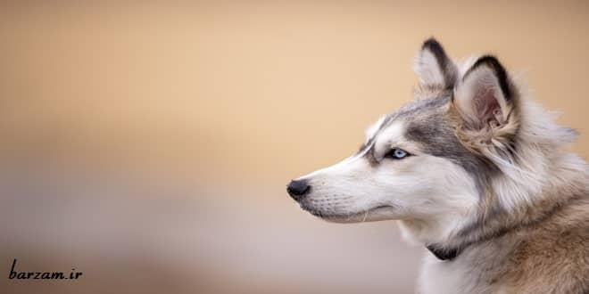 معرفی 10 سگ باهوش دنیا + عکس