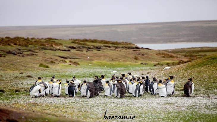 زندگی و تغذیه پنگوئن ها