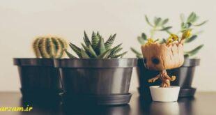 فواید گیاهان آپارتمانی برای انسان