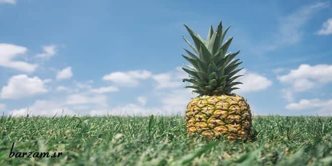 آناناس و خواص آن