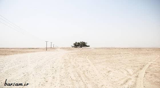 نقش درختان در حفظ منابع آبی و جلوگیری از فرسایش خاک